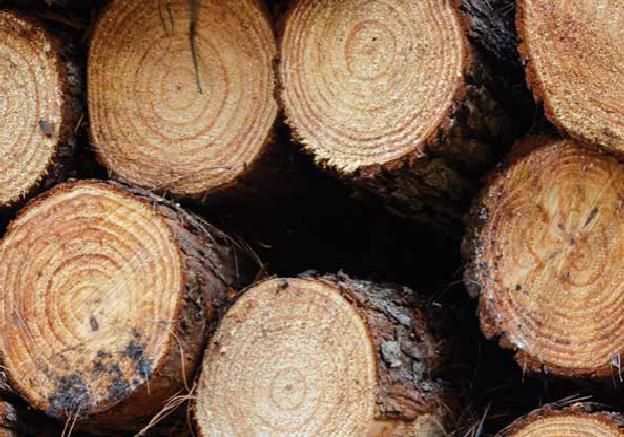 O valor da madeira deve se manter nos mesmos patamares, pelo menos no primeiro semestre de 2017.